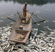 Fisherman collects dead fish
